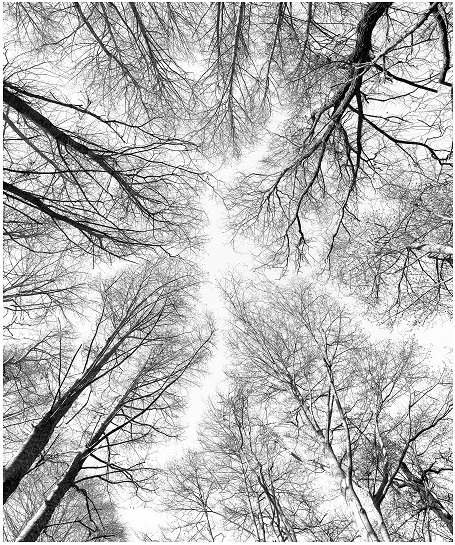 Alders and Sky by Todd Pickering